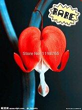 SwansGreen 15: Rare Bonsai Fleur Graine jardin