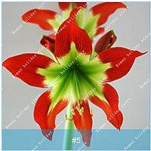 SwansGreen 18: Exotique Hosta Graine de plantes
