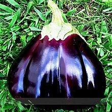 SwansGreen Violet: 50 Pcs/Sac Narcissus Graines