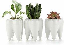 T4U Pot de Succulente Dent Lot de 3, Petite Cactus