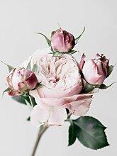 Tableau sur toile roses 65x65cm