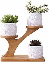 Tcn Pots de Fleurs Plantesen Céramique-avec Cadre