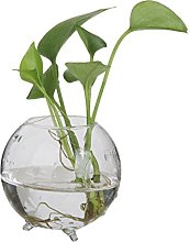 Vase Boule en Verre Transparent pour Plante Fleur