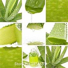 Vert: Plante De Jardin 100 Pcs Mesa Aloe