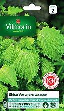 Vilmorin - Shiso vert -plante annuelle - Facile à