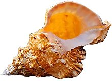 W.Z.H.H.H Ornements de Coquille Conque Coquille