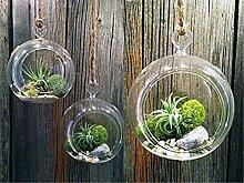 Weanty Lot de 3 En verre suspendu plante fleur