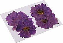 yotijar Fleur de Fleurs Pressées de 20 Pièces
