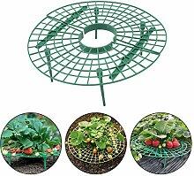 Zengup Lot de 5 supports pour plantes de fraisier