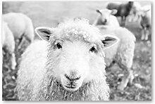 zuomo Mouton Noir et Blanc Photo Imprime Ferme